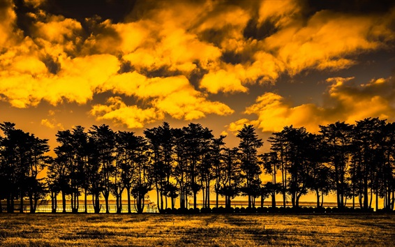 Wallpaper Trees, clouds, sunset, yellow style