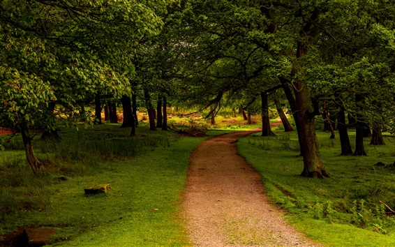Wallpaper Trees, path, grass, green, UK, Peak District National Park