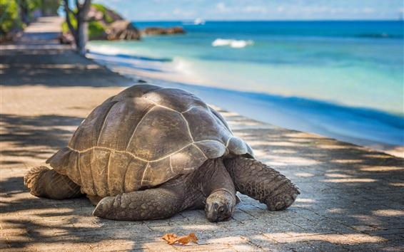 Papéis de Parede Tartaruga, mar, costa