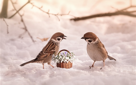 Wallpaper Two sparrows, snow, flowers