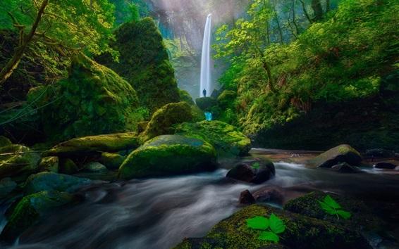 Обои Водопад, мох, зеленый, кустарники, камни, люди, США