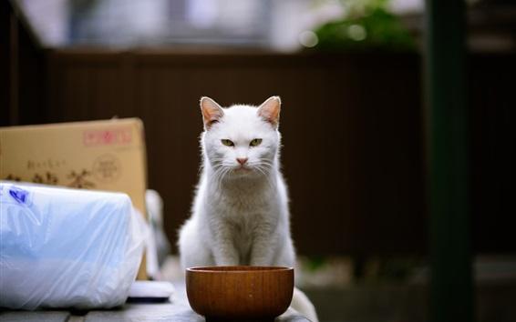 Fond d'écran Vue de face de chat blanc, bol