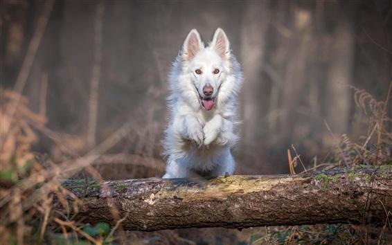 Wallpaper White dog jumping through tree