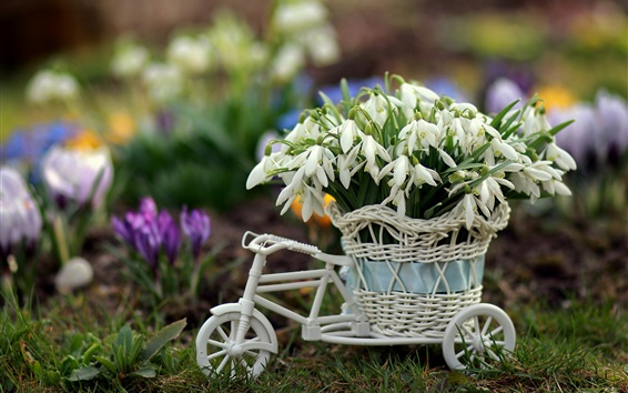 Wallpaper White snowdrops, toy bike
