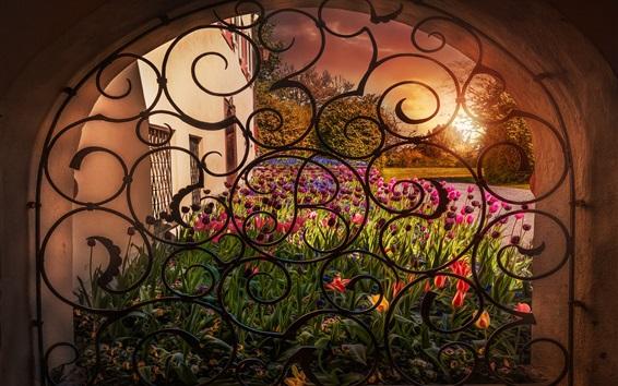 Обои Окно, арка, цветы, тюльпаны