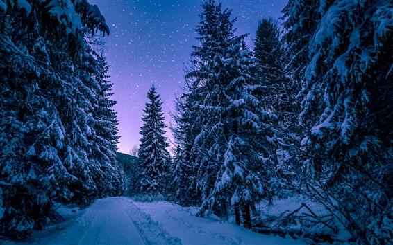 Fond d'écran Hiver, forêt, arbres, neige, étoilé