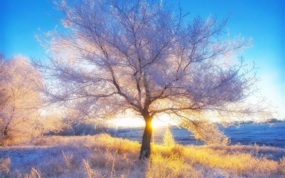 Wallpaper Winter, snow, trees, sun rays, morning