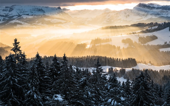 Wallpaper Alps, sun rays, mountains, morning, trees, snow, winter