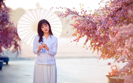 Wallpaper Asian girl, white dress, umbrella, sakura