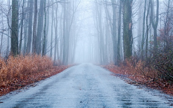 Wallpaper Autumn, fog, road, trees, forest