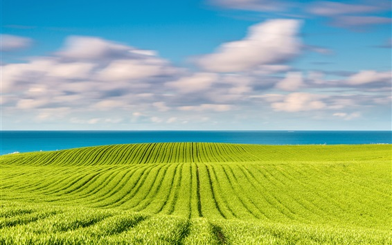 Wallpaper Baltic sea, spring in May, green fields