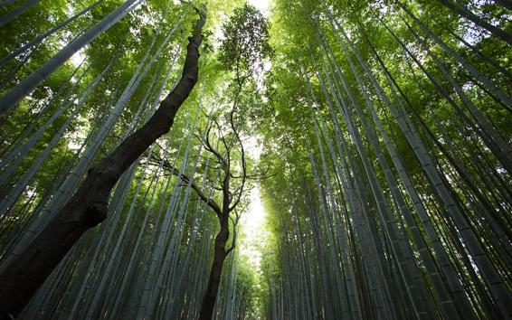 Wallpaper Bamboo forest, light, glare