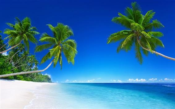 壁纸 美丽的海滩,热带天堂,棕榈树,蓝色的大海