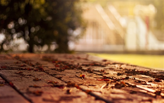 Wallpaper Bench, leaves, autumn