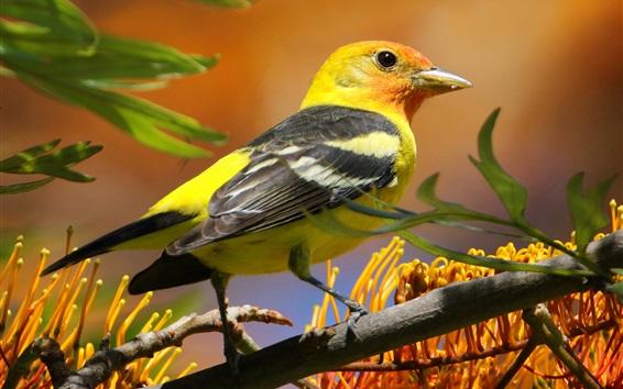 Papéis de Parede Pássaro, bico, cauda, árvore, flores