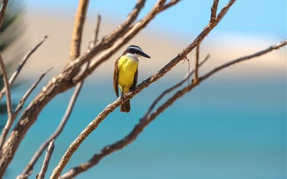Wallpaper Bird, twigs, tree, bokeh