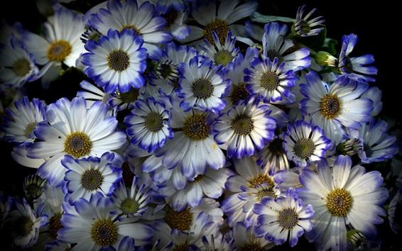 Papéis de Parede Flores de pétalas azuis e brancas