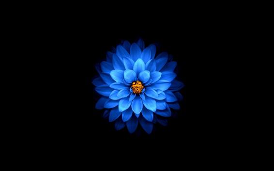 Fond d'écran Fleur de pétales bleus, fond noir