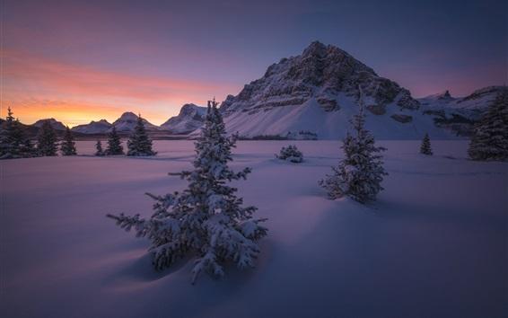 Fond d'écran Canada, Parc national Banff, neige, montagnes, arbres, hiver, nuit