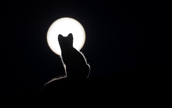 Wallpaper Cat silhouette, night, moon, darkness