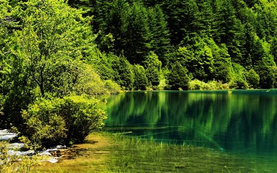 Wallpaper China, Jiuzhaigou National Park, trees, lake, green