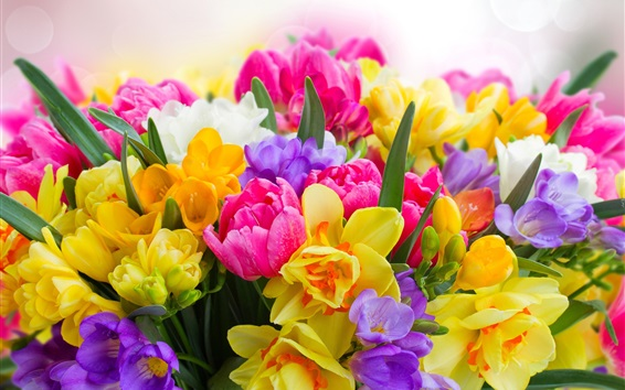 Wallpaper Colorful flowers, daffodils, tulips, freesia