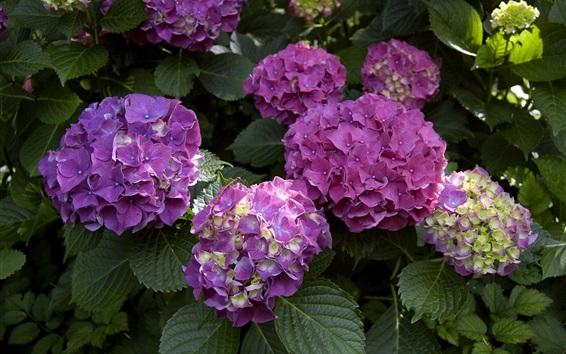 Papéis de Parede Flores coloridas de hortênsia, pétalas de rosa e amarelas
