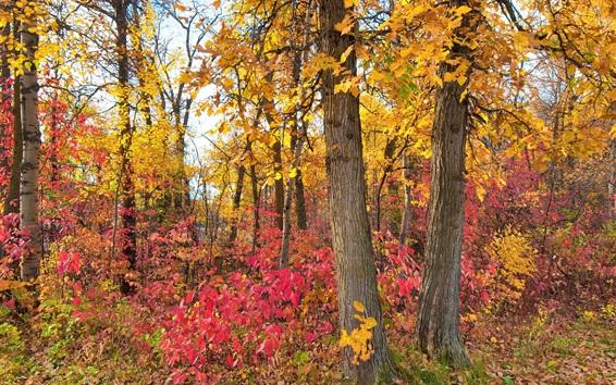 Wallpaper Crimson leaves, forest, trees, autumn
