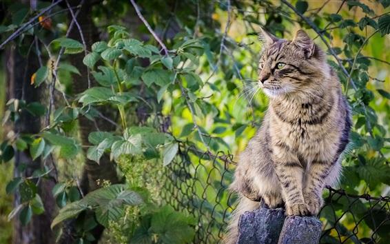 Обои Симпатичный котенок, забор, зеленые листья