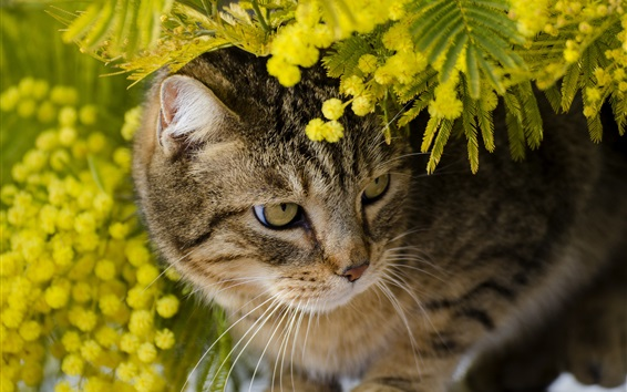 Wallpaper Cute kitten hidden in the flowers