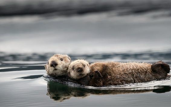 Papéis de Parede Lontras bonito, água