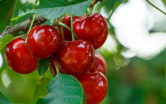 Papéis de Parede Deliciosa cereja vermelha, fruta madura, folhas