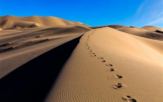 Wallpaper Desert, sands, traces, dunes