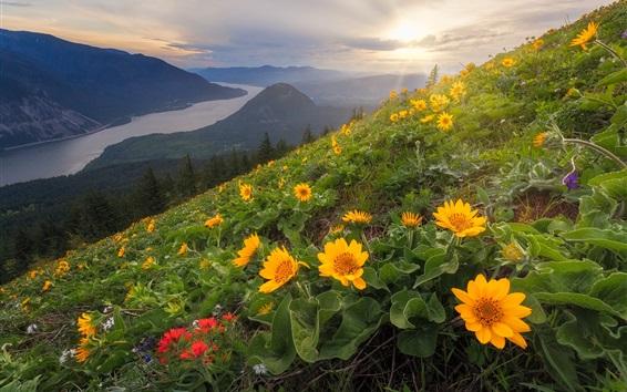 Papéis de Parede Cão, montanha, flores amarelas, declive, cascata, gama, rio columbia, eua