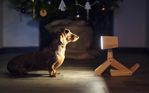 Обои Собака и игрушечная собака, лицом к лицу
