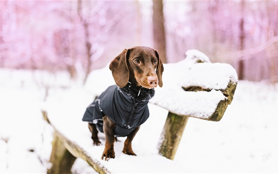 Wallpaper Dog, bench, snow, winter