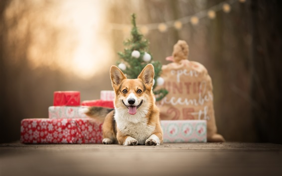Wallpaper Dog, front view, gifts