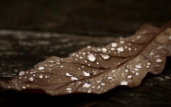 Wallpaper Dry leaf, water drops