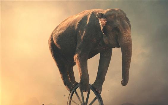 Papéis de Parede Roda de jogo de elefante