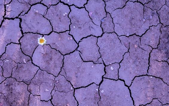 Обои Цветок, земля, земля, трещина