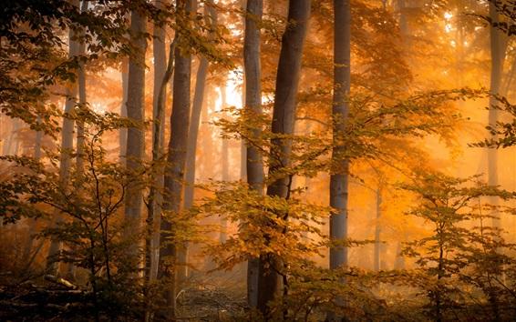 Wallpaper Forest, trees, autumn, fog