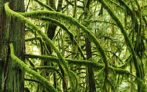 Wallpaper Forest, twigs, moss, green
