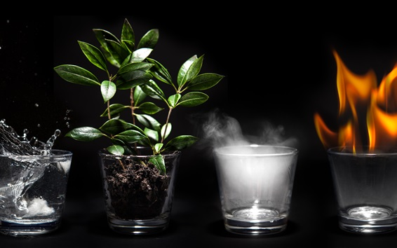 Wallpaper Four glass cups, fire, steam, plants, water