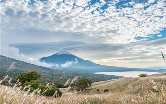 Wallpaper Fuji Mount, grass, reeds, clouds, Japan landscape