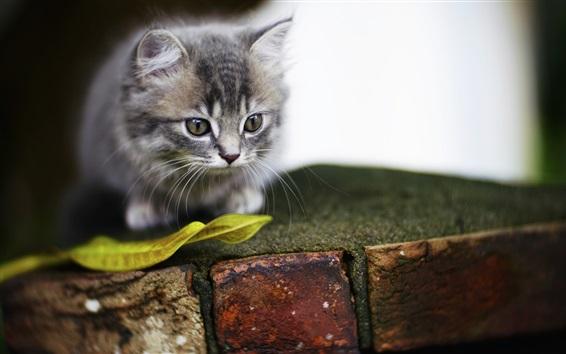Обои Пушистый котенок, лист, кирпич