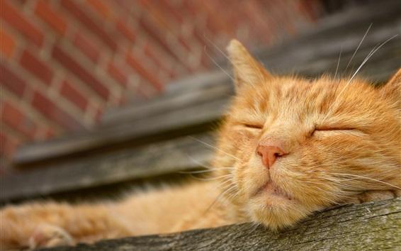 Papéis de Parede Gatinho laranja peludo dormindo