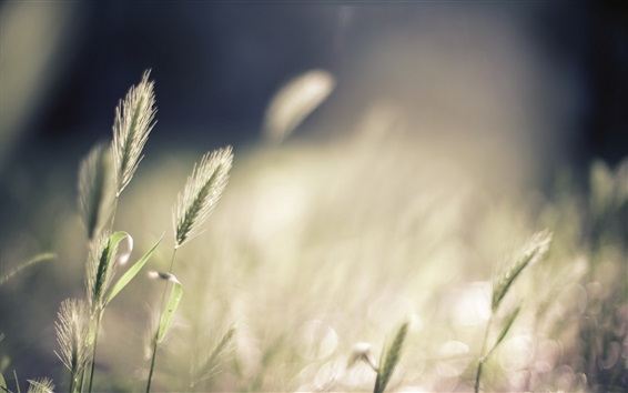 Wallpaper Grass, bokeh, summer