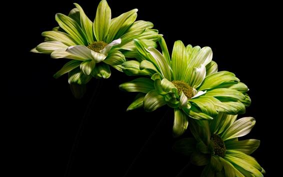 Wallpaper Green flowers, black background