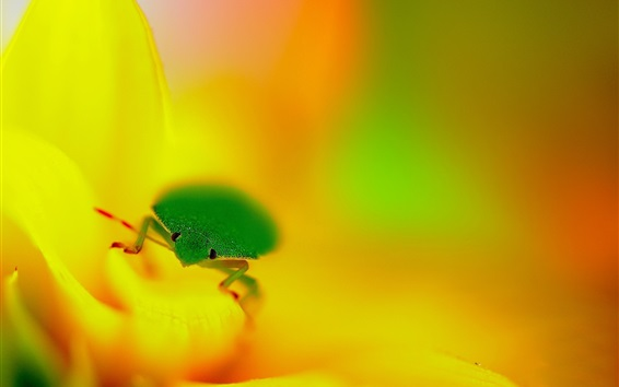 Wallpaper Green insect, yellow flower