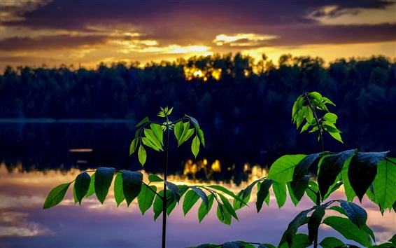 壁紙 緑の葉、小枝、川、夕暮れ